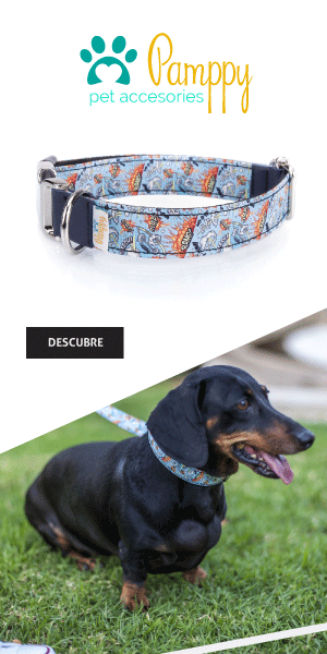 collares perro pamppy